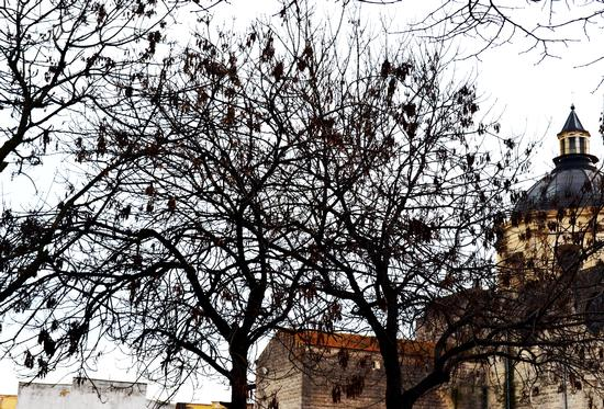chiesa madre - Trinitapoli (1071 clic)