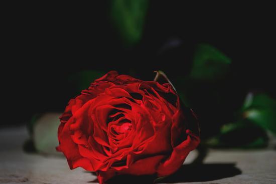 rosa rossa - Trinitapoli (921 clic)