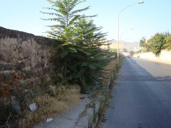 Il Verde in città. - Palermo (3287 clic)