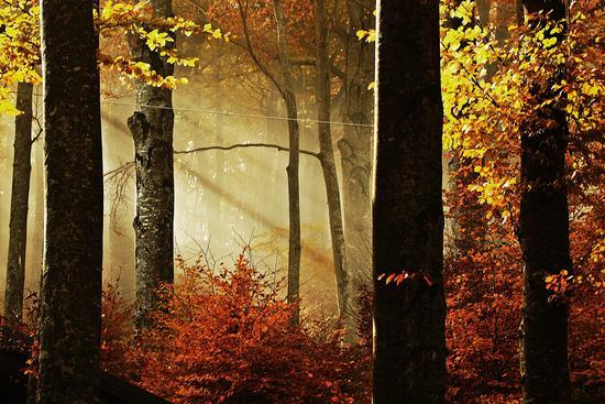 ....il bosco magico - Piane di mocogno (4393 clic)