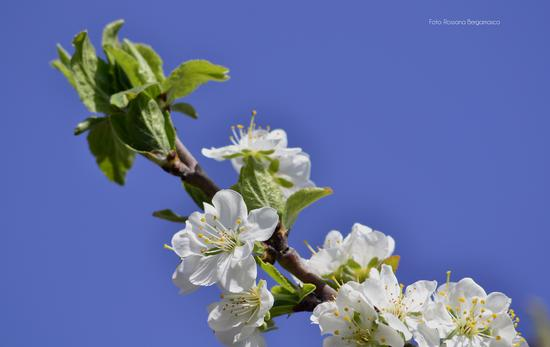 Primavera - Modica (2020 clic)