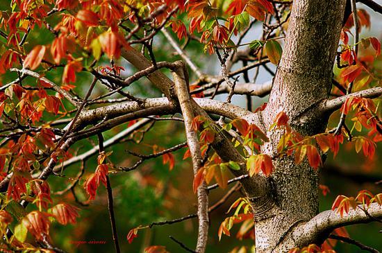 Intrecci di rami in autunno - Nogaredo (3813 clic)