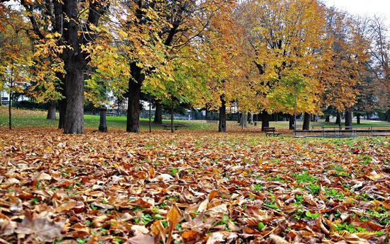 Al parco in autunno - Rovereto (1967 clic)