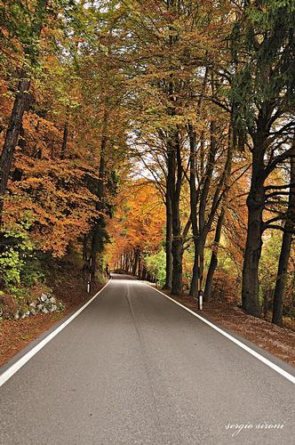Verso l'autunno - Villa lagarina (3479 clic)