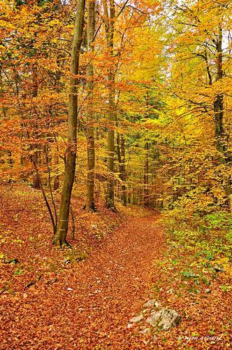 Sentiero nel bosco vestito d'autunno - Villa lagarina (5452 clic)