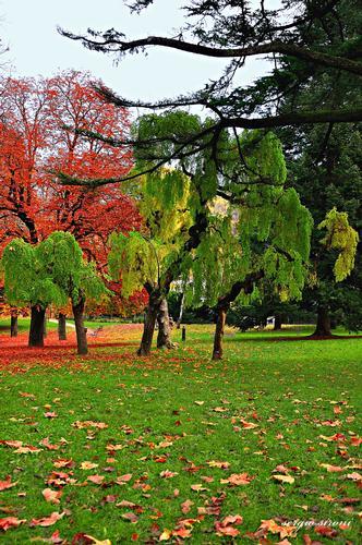 Autunno nel parco - Rovereto (3530 clic)