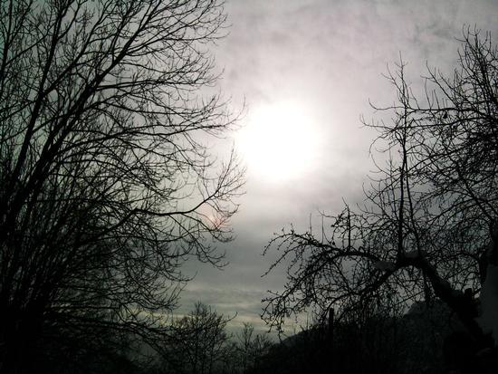Gli alberi neri.. - Borgomaro (2088 clic)
