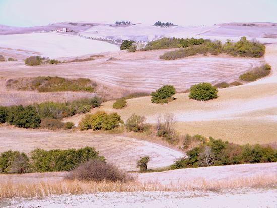 colline....rosa (436 clic)