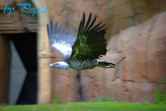 zoom park 2 - Cumiana (1322 clic)