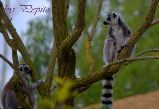 zoom park 7 - Cumiana (1603 clic)