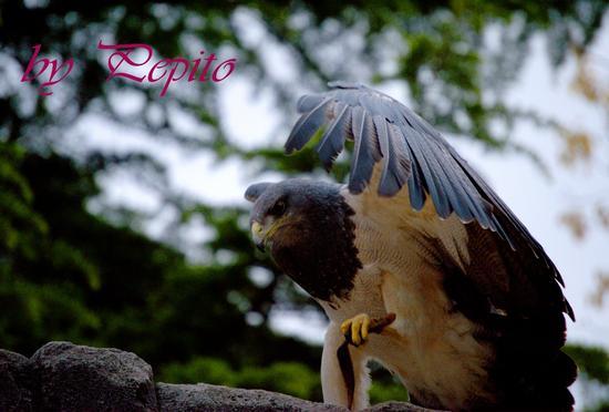 zoom park 11 - Cumiana (1409 clic)