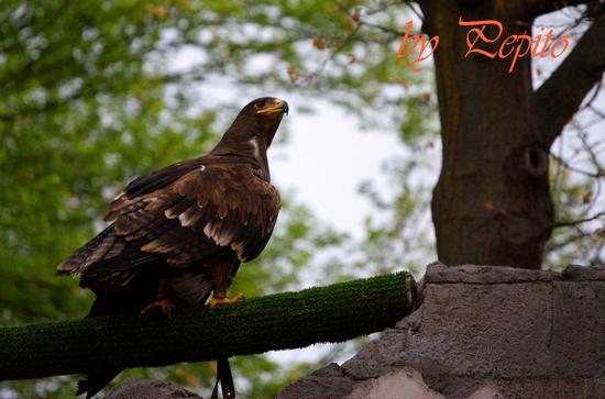 zoom park 13 - Cumiana (1454 clic)
