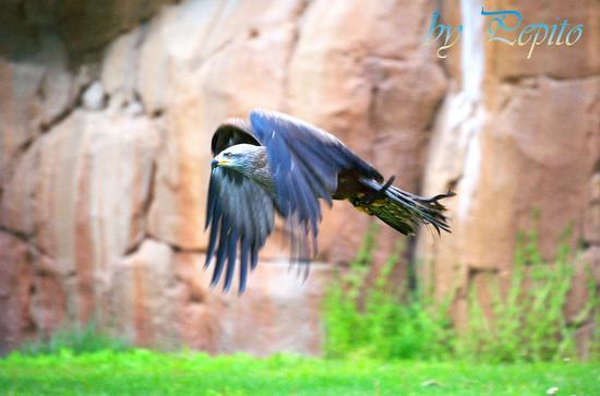 zoom park 18 - Cumiana (1418 clic)