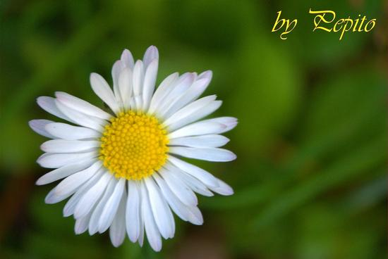 il giardino 2 - Settimo torinese (1333 clic)