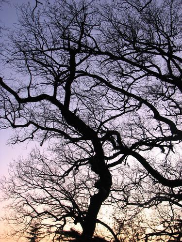 tramonto d'inverno - Dozza (1629 clic)