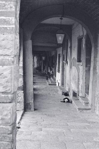 porticato con gatti - Civitella in val di chiana (1618 clic)