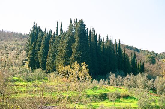 i giganti - Civitella in val di chiana (1998 clic)