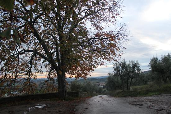 autunno - Battifolle (1226 clic)