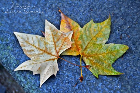 L'autunno napoletano - Napoli (777 clic)