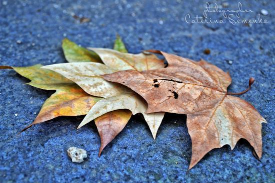 L'autunno napoletano - Napoli (813 clic)