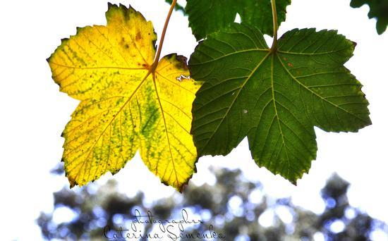 L'autunno napoletano - Napoli (760 clic)