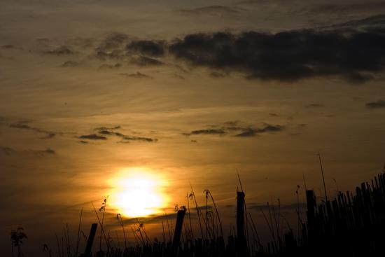 Padule al tramonto - Fucecchio (1064 clic)