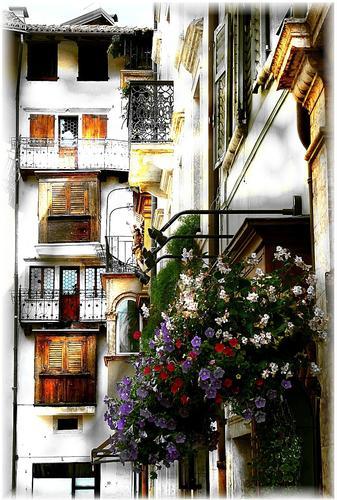 fiori in città - Trento (1471 clic)
