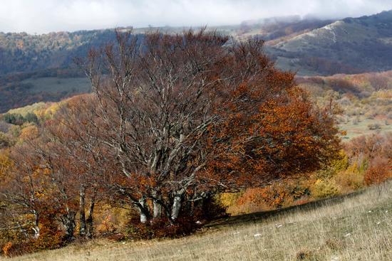 L'autunno - San severino marche (726 clic)