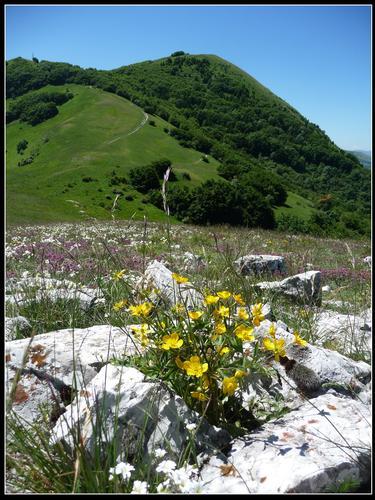 prati fioriti salendo verso monte igno - Sefro (2473 clic)