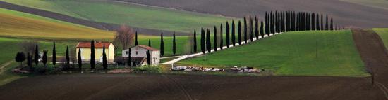 Campagna marchigiana - Cingoli (932 clic)