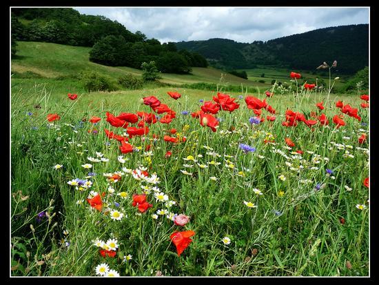fioritura primaverile - Sefro (2808 clic)