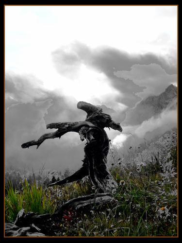 creatura della natura guardiano del rifugio - Calalzo di cadore (2420 clic)