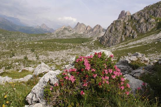 Verso il rifugio nuvolau - Cortina d'ampezzo (954 clic)