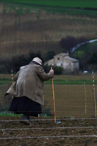 Lamore per la terra non ha età - Osimo (1360 clic)
