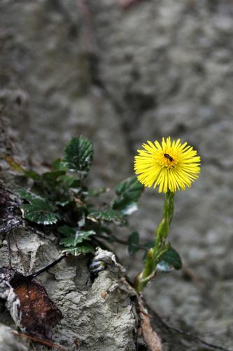 i primi segni della primavera  - Sirolo (1365 clic)