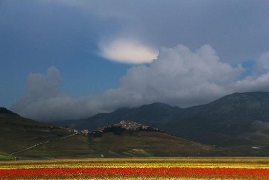 contrasti  - Castelluccio (8142 clic)