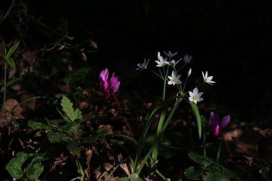 Fiori nel bosco - CASTELFIDARDO - inserita il 18-Apr-13