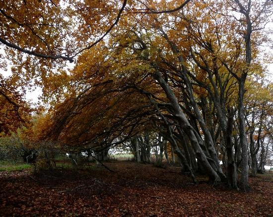 arco naturale - San severino marche (3269 clic)