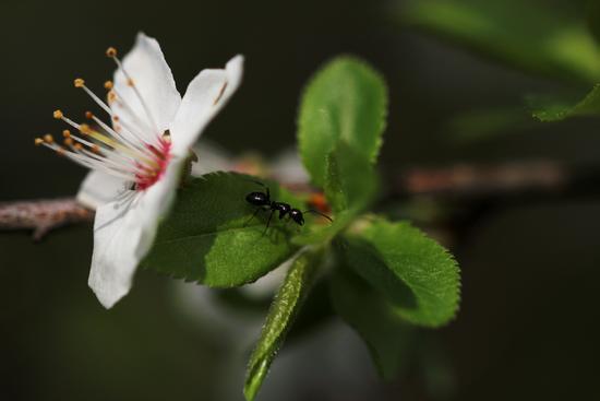 Il risveglio della primavera - Castelfidardo (908 clic)