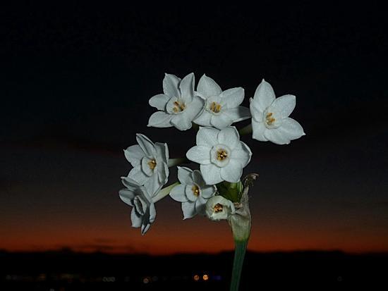 Un attimo di gioa vedere un fiore un tramonto ma le luci della città ci aspettano  - Camerano (1287 clic)