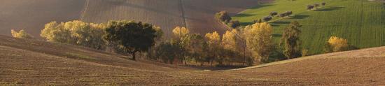 - Osimo (698 clic)
