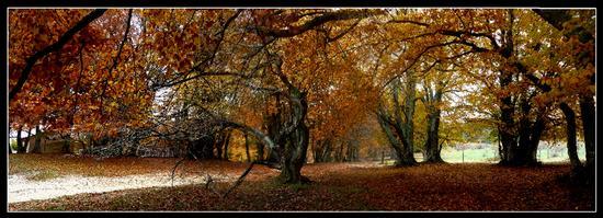 luci e colori autunnali - San severino marche (4336 clic)