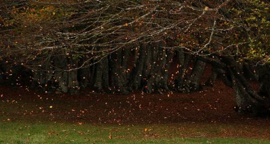 Foglie al vento - San severino marche (1313 clic)