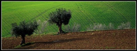 Madre terra - Castelfidardo (826 clic)