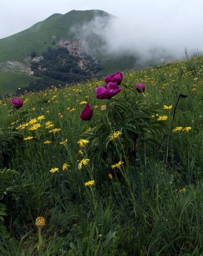 Prati in fioreil cielo nuvolo e la nebbia smorzavano la luce ma non la loro bellezza - Acquacanina (1396 clic)