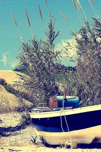 - Pineto (4214 clic)
