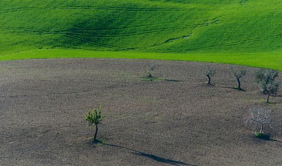 verdi pianure - Tortoreto (1821 clic)