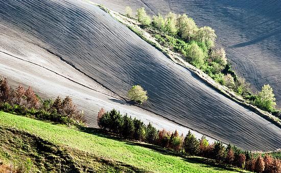 lande desolate - Tortoreto (1953 clic)