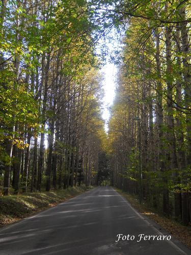 Viale alberato - Gambarie (2010 clic)