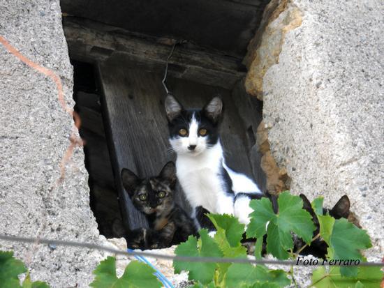 Famigliola di Gatti  - Mammola (1540 clic)